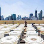 Una startup che fa crescere la spirulina sul tetto