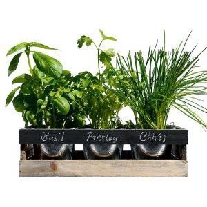 Mini giardino da interni - Piante aromatiche